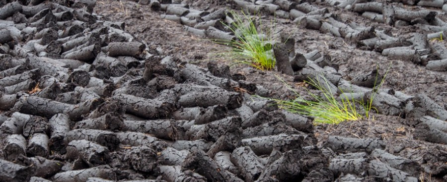Photo of peat field
