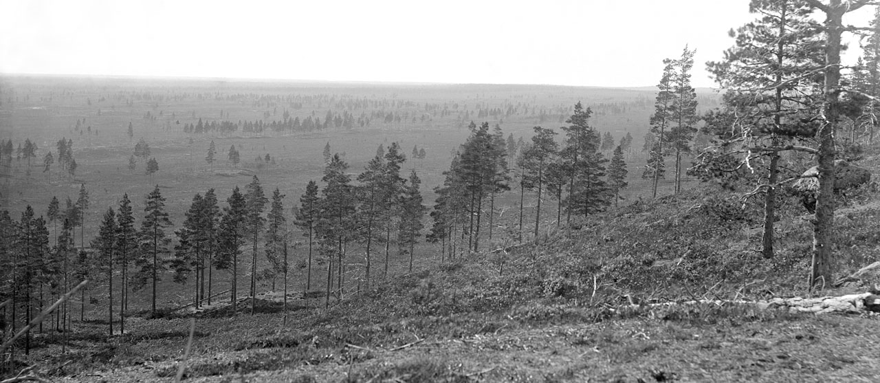 A sparsely forested landscape from the 1890s
